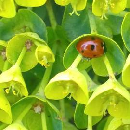 #ladybug Found Some Shelter From The