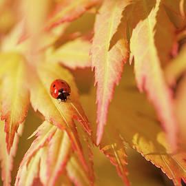 Jenny Rainbow - LadyBug Think Good Luck