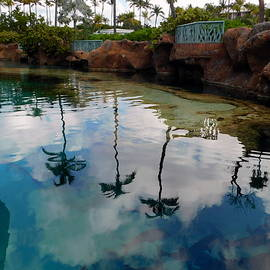 Lagoon Reflections by Arlane Crump