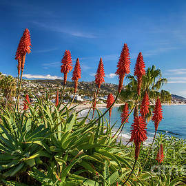 Mariola Bitner - Laguna Beach Aloe Bloom