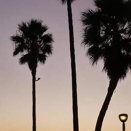 John Franke - Laguna Beach Sunset