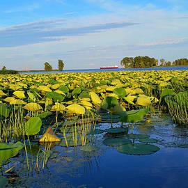 Michael Rucker - Lake Erie Marsh