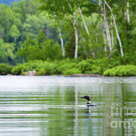 Denise Lilly - Lake Loon