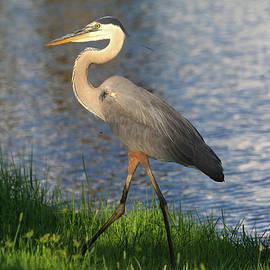 Donna Kennedy - Lakeside Stroll