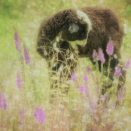 Lamb At Springtime Painterly by Belinda Greb