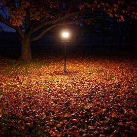 Lamp-lit Leaves by Lars Lentz