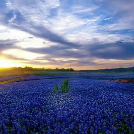 Kurt Westerman - Land of The Texas Bluebonnets