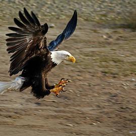 Landing gear down - 365-300 by Inge Riis McDonald
