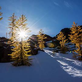 Larches in Snow - Pelo Blanco Photo