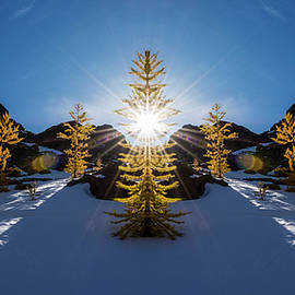 Pelo Blanco Photo - Larches in Snow Reflection