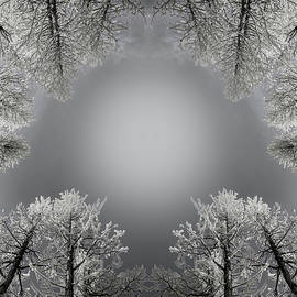 Larches Reflection Black and White - Pelo Blanco Photo