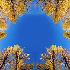 Pelo Blanco Photo - Larches Reflection