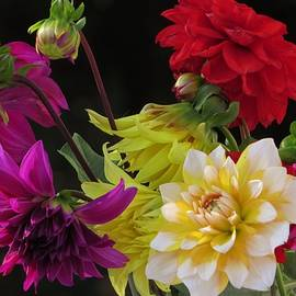B Vesseur - Last Colourful Dahlias