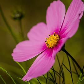 Linda  Howes - Last Flower
