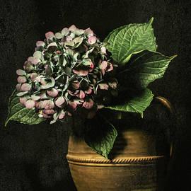 Jerri Moon Cantone - Last Hydrangea of the Season