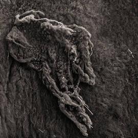Last Of Winter Coat by Chris Bordeleau