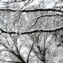 Rick Maxwell - Last Throes of Winter