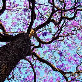 Lavendar Sky by Neha Gupta
