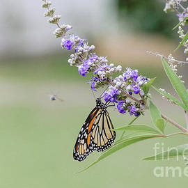 Lavender 3 by Andrea Anderegg