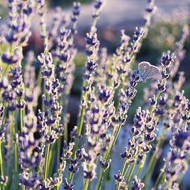 Yarinka Morozova - Lavender Butterfly