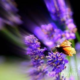 Lavender Garden by Michele Hancock
