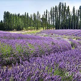 Martin Konopacki - Lavender Hills