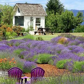Lavender House by Debra Orlean