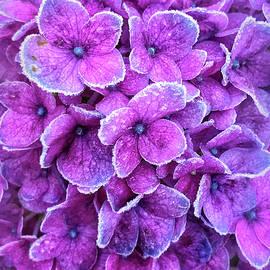 Jill Love - Lavender Ice