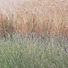 Lavender Meets Wheat by Georgia Fowler