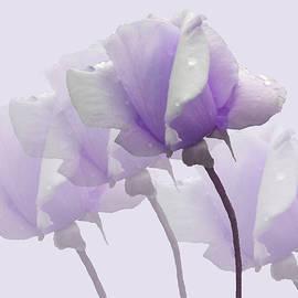 Rosalie Scanlon - Lavender Roses