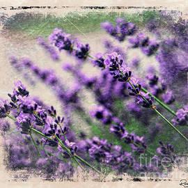 Rene Crystal - Lavender Spring
