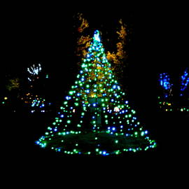 Lawn Christmas Tree Lights by Arlane Crump