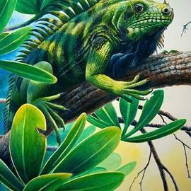 Lazin' Iguana by Christopher Cox