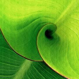 Sarah Loft - Leaf Abstract 16