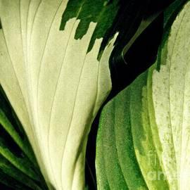 Sarah Loft - Leaf Abstract 6