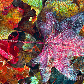 Todd Breitling - Leaf Ice Light