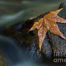 Leaf on a rock by Bryan Keil