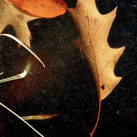 Leaf On Frozen Pond by Christine Montague