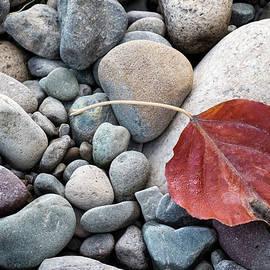 Mary Lee Dereske - Leaf on River Rocks