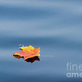 Leaf On Water by Lori Dobbs