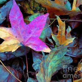 Todd Breitling - Leaf Pile Portrait