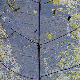 Leaf Structure by Debbie Cundy