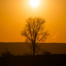 Leafless Sunset Silhouette by Chris Bordeleau