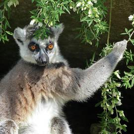 Margaret Saheed - Leafy Patterned Lemur