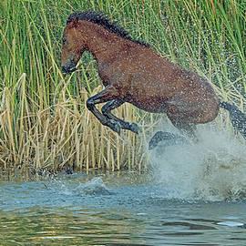 Tam Ryan - Leaping Wild Horse