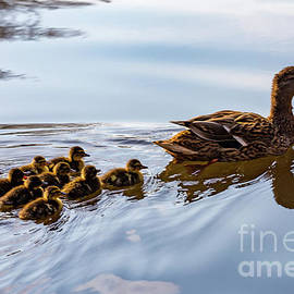 Learning To Swim by Charles Hite