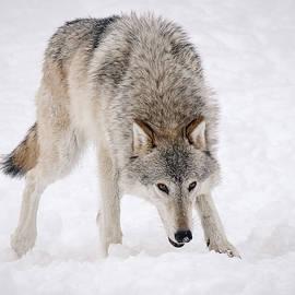 Athena Mckinzie - Leary Wolf Style