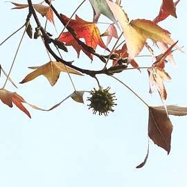 YT Photo - Leaves