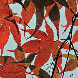 Leaves in Light and Shadow 1 by Claudia O'Brien