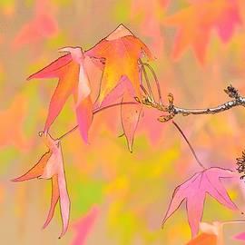 Leaves Macro 4 Abstract 1 by Linda Brody